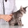 Ветеринарные клиники в Бабаево